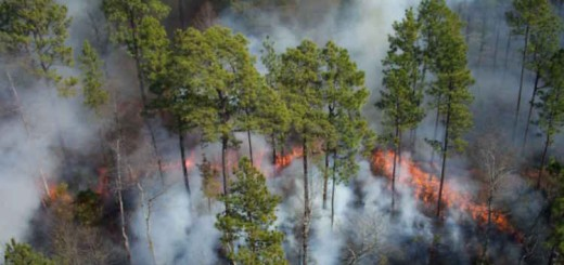 fire-moves-through-forest
